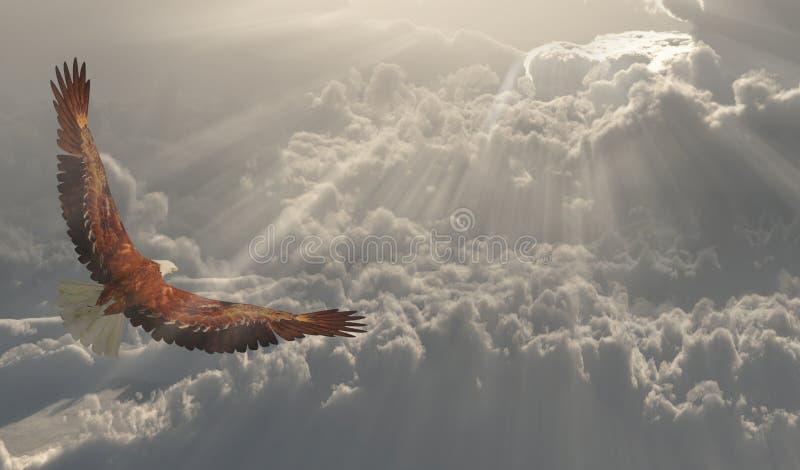 Eagle im Flug über die Wolken vektor abbildung