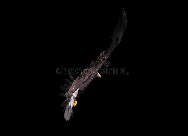 Eagle met geopende vleugels geïsoleerd stock foto's