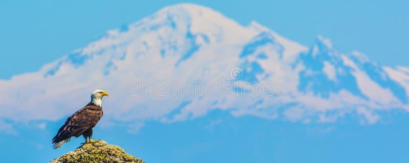 Eagle & Mt piekarz obrazy royalty free