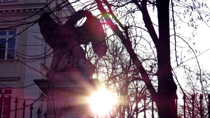 Eagle no sol durante o por do sol fotografia de stock royalty free