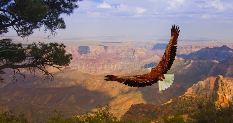 Eagle over Grand Canyon USA fotografia stock