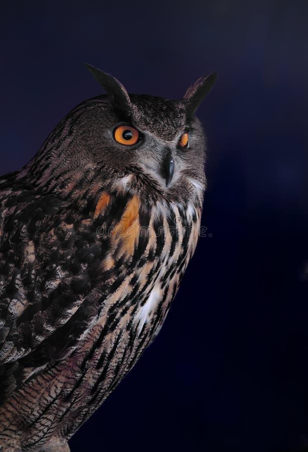 Free Eagle Owl Royalty Free Stock Image - 13736956