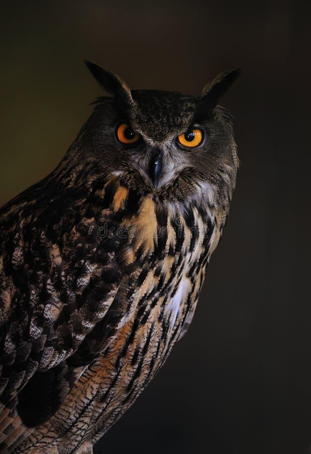 Free Eagle Owl Royalty Free Stock Photo - 13737075