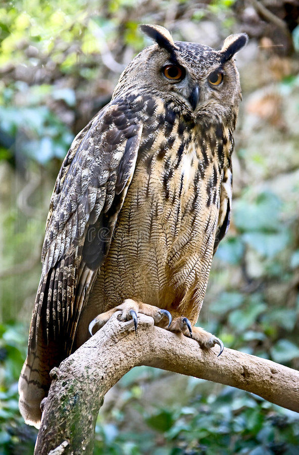 Download Eagle owl 4 stock photo. Image of creature, view, cage - 5379978