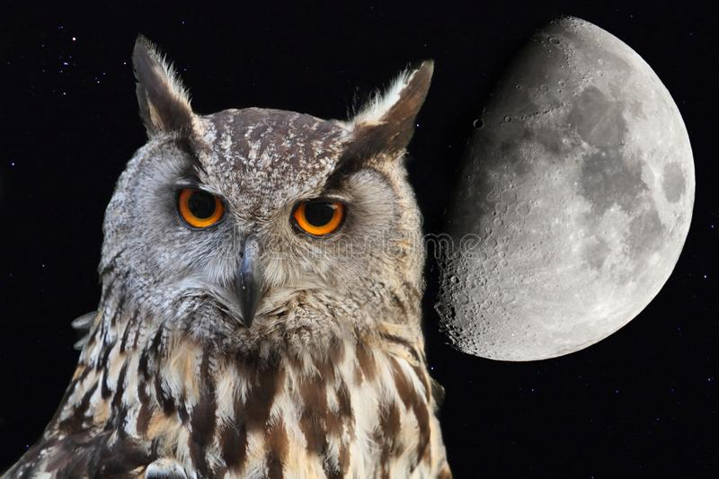 Eagle owl in the night. Eagle owl with background the moon in the night sky royalty free stock photos