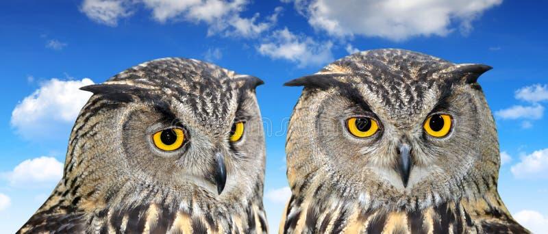 Download Eagle Owl stock image. Image of closeup, beast, wild - 39239809