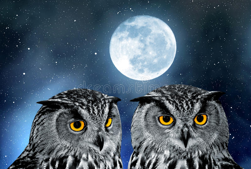 Eagle Owl, Bubo bubo. In night sky royalty free stock images