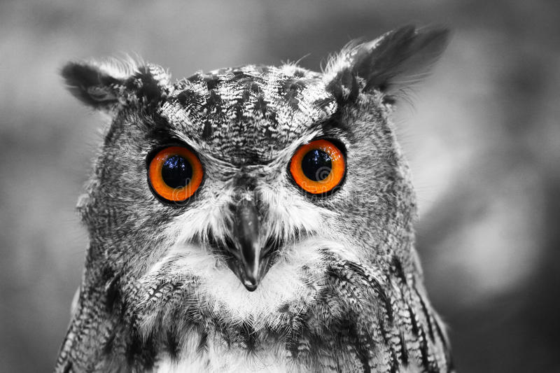 Eagle Owl Portrait fotografia stock libera da diritti