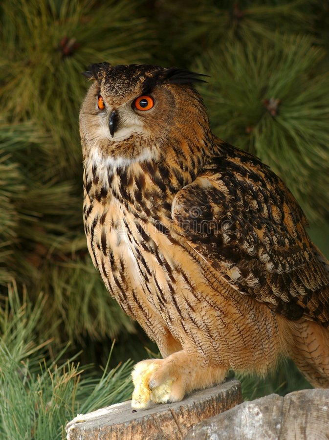Download Eagle owl with prey. stock image. Image of spring, nature - 108349
