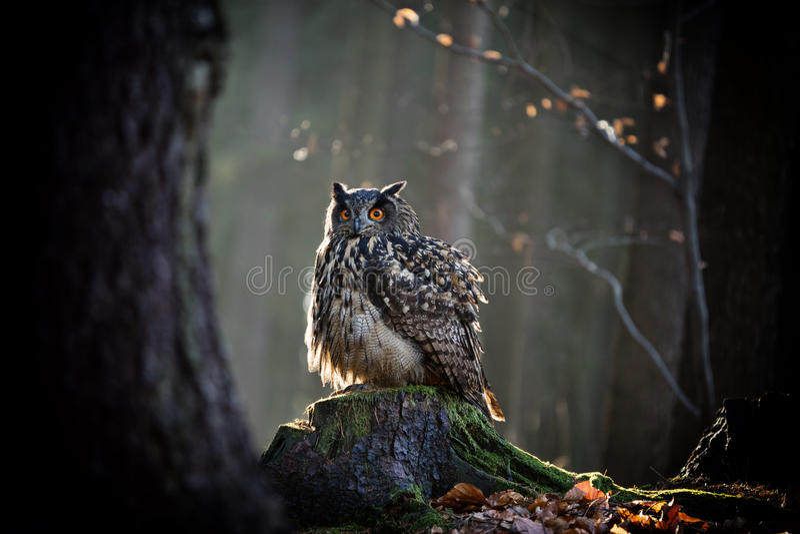 Eagle Owl sitter på trädstubben arkivbild
