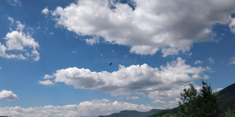 Eagle p? himmel arkivfoton