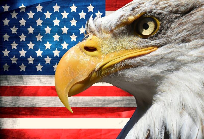 Eagle-Porträtnahaufnahmesymbol USA oder wir Streifen und Sternflagge stockbilder