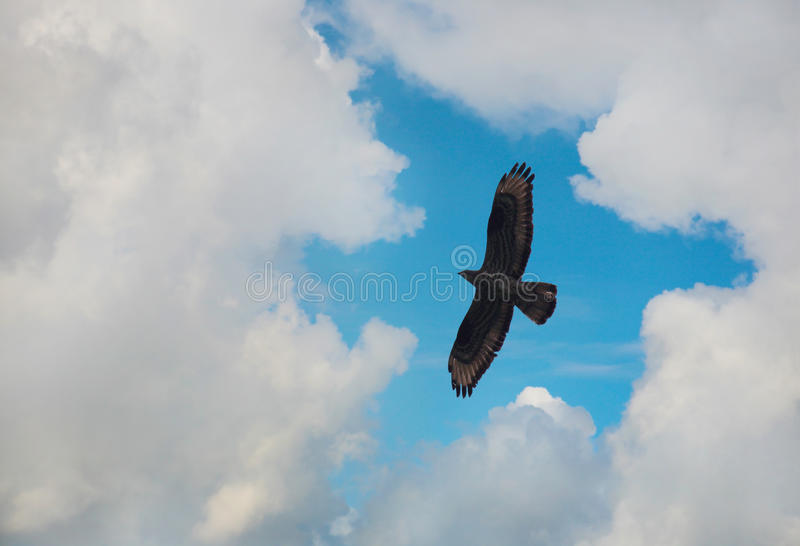 Eagle que voa no céu fotografia de stock royalty free