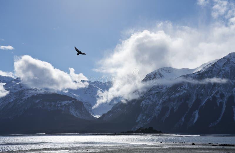 Eagle que vuela sobre la entrada de Chilkat imagen de archivo