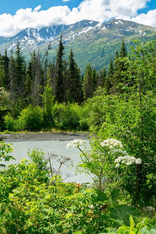 Eagle River Nature Center in Alaska royalty free stock image