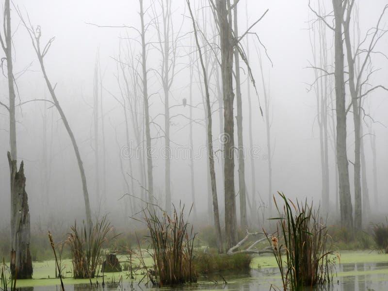 Eagle sitzt auf dem Sumpfbaumast, der im Nebel versteckt wird lizenzfreies stockfoto