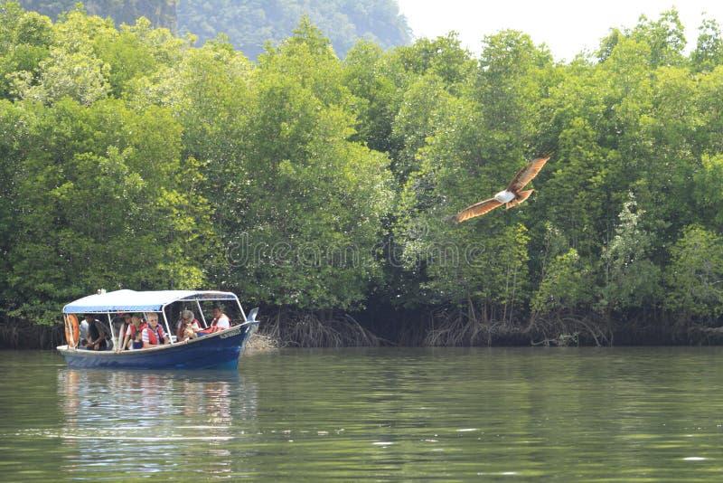 Eagle som håller ögonen på på fartygritt på Pulau Langkawi, Malaysia arkivbild