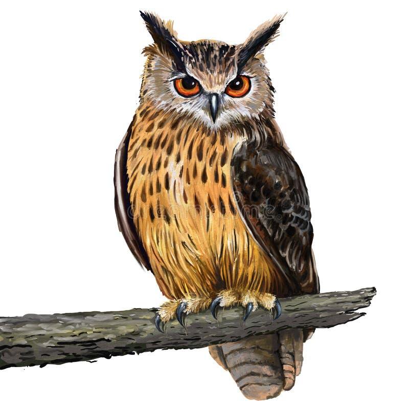 Eagle sowa ilustracja wektor
