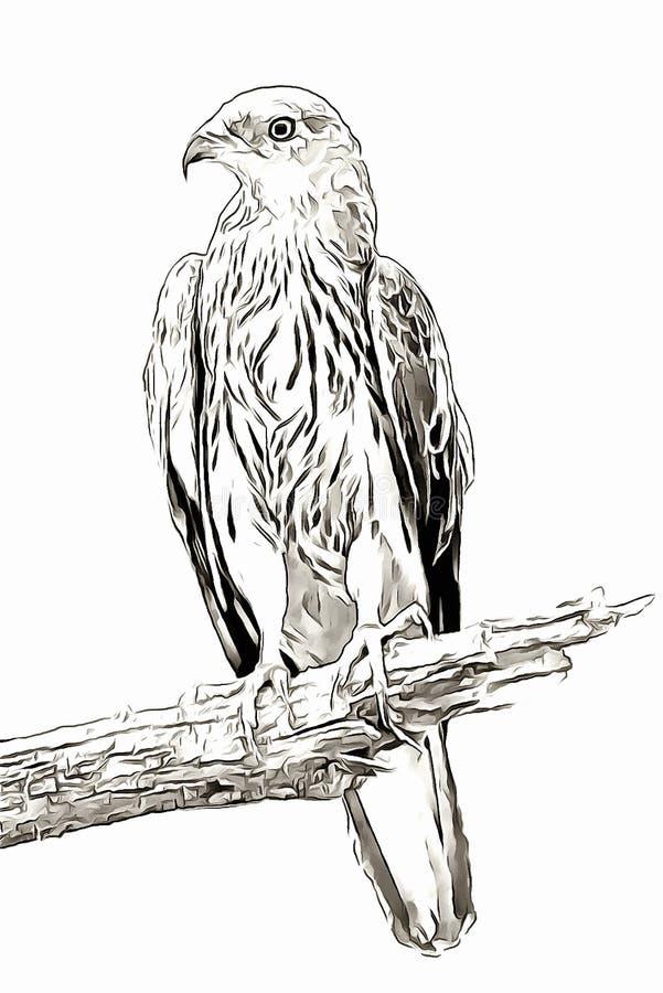 Eagle sullo schizzo digitale del ritratto del ramo immagini stock