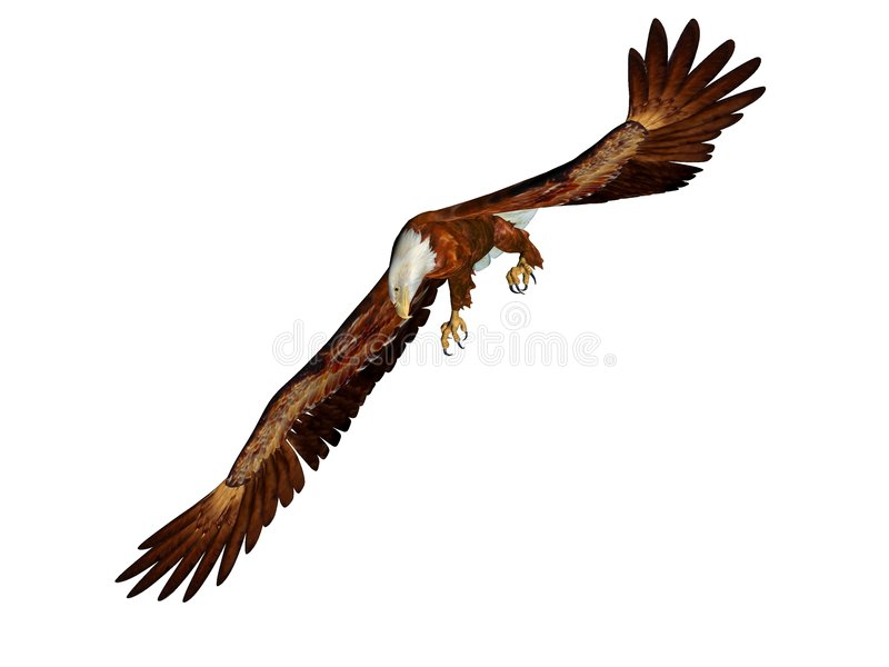 Eagle swooping royalty free illustration