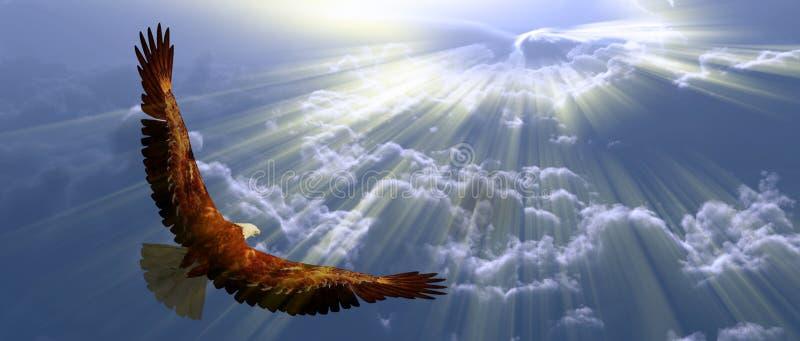 Eagle tijdens de vlucht royalty-vrije illustratie