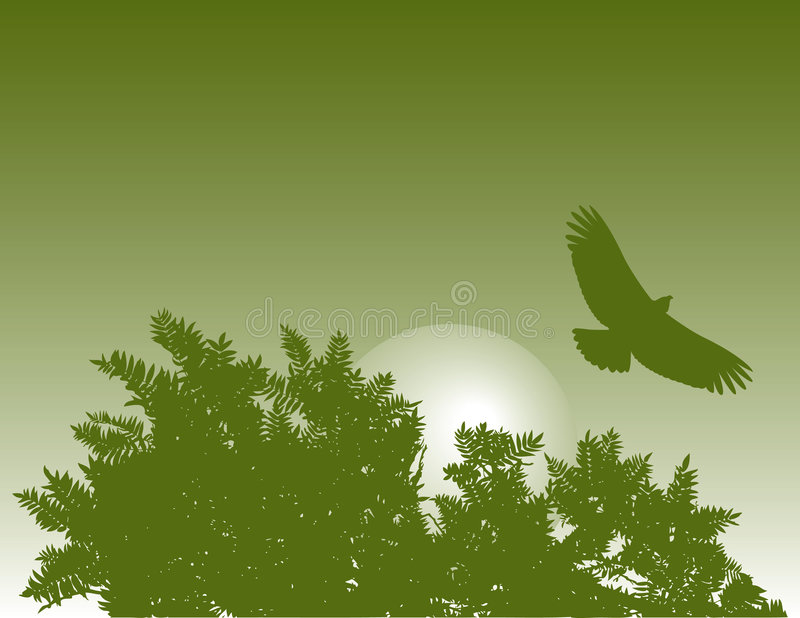 Download Eagle And Tree Royalty Free Stock Photos - Image: 4721548