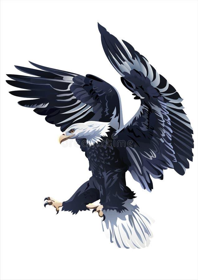 Eagle vektor på en vit bakgrund vektor illustrationer