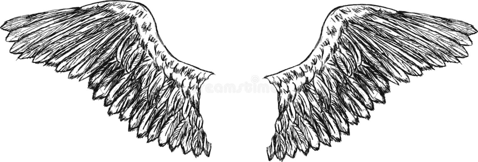 Download Eagle wings vector stock vector. Image of feather, flying - 9646367