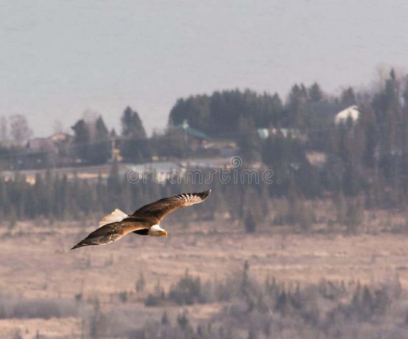 Download Eagle in Zacht licht stock afbeelding. Afbeelding bestaande uit licht - 54090757