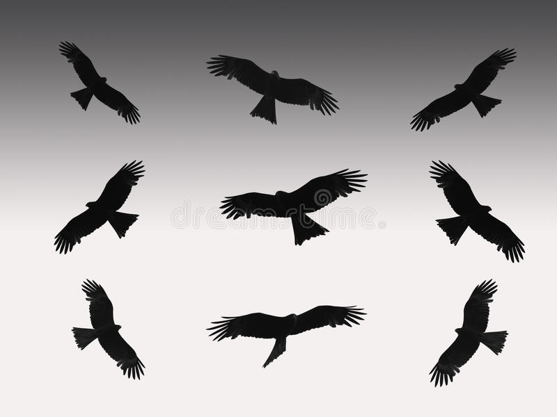 Eagles illustrazione di stock