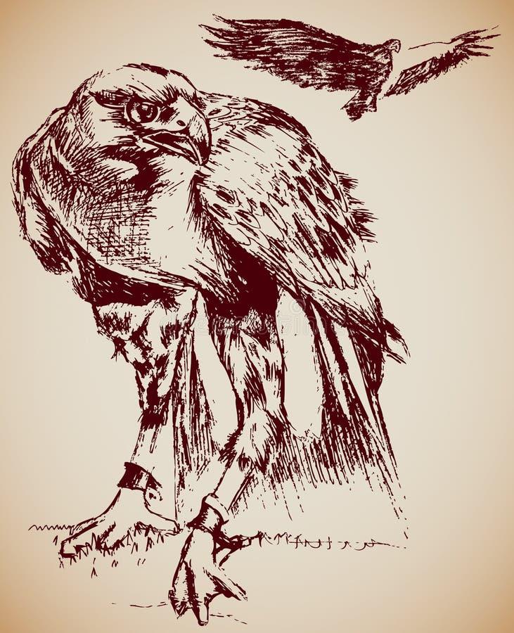 Eagles ilustração do vetor
