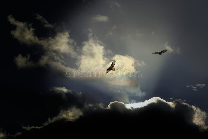 Eagles flyg mot en dramatisk himmel royaltyfri bild