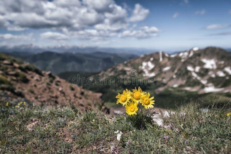 Eagles gniazdeczka pustkowie, Kolorado obrazy royalty free