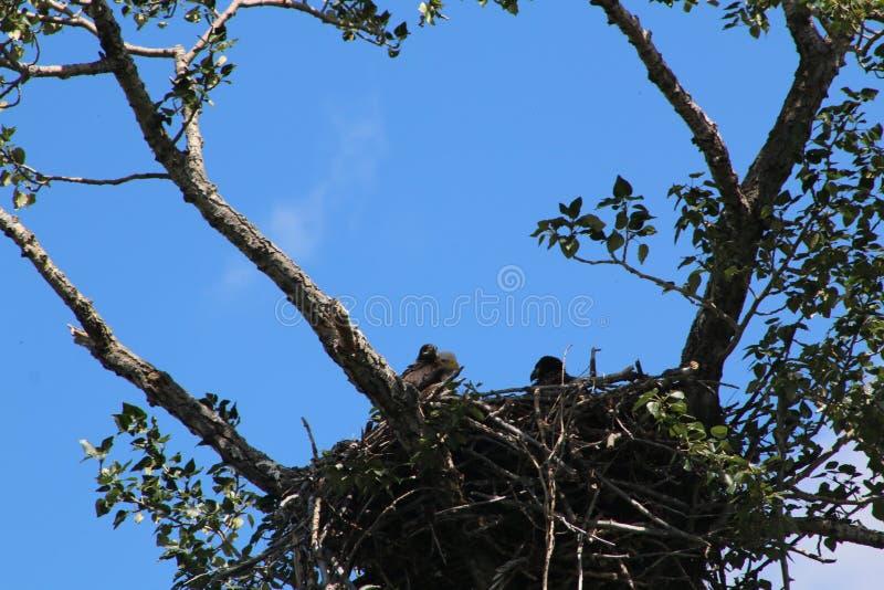 Eagles-Nest royalty-vrije stock fotografie