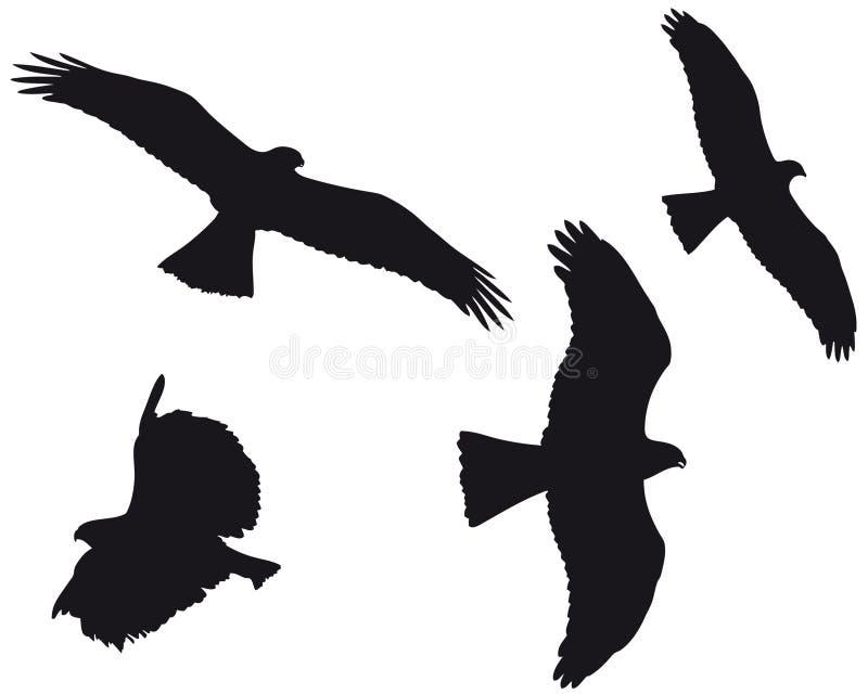 Eagles (vettore) illustrazione di stock