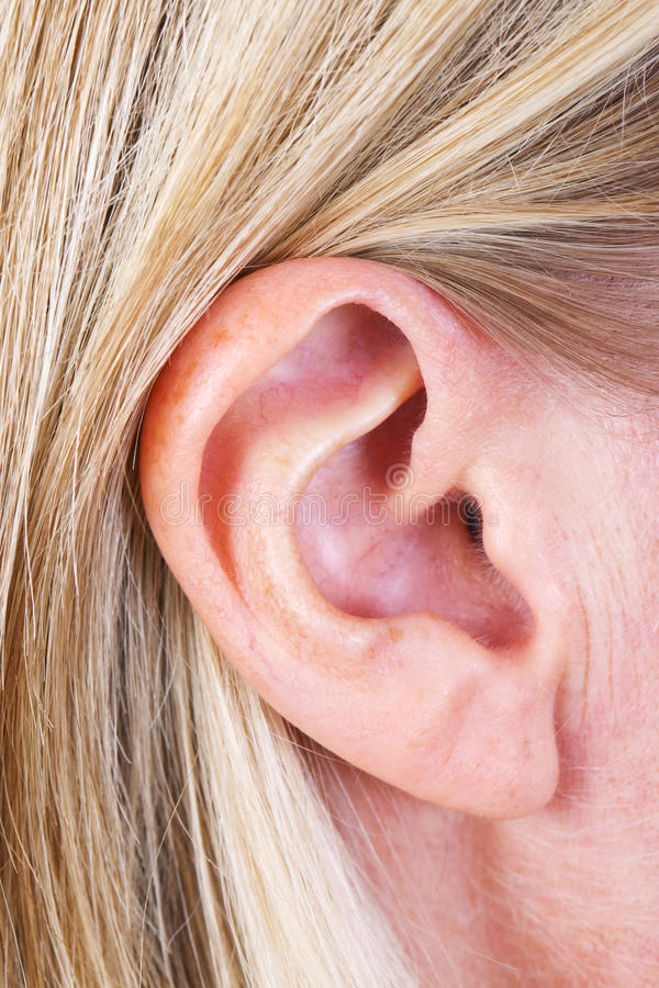Ear. Close up of a female ear stock images