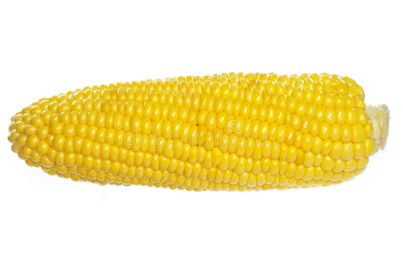 Download Ear of corn stock image. Image of vegetable, kernels - 13882999