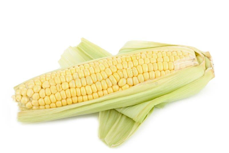Download Ear of corn stock photo. Image of food, vegetable, leaf - 16966802