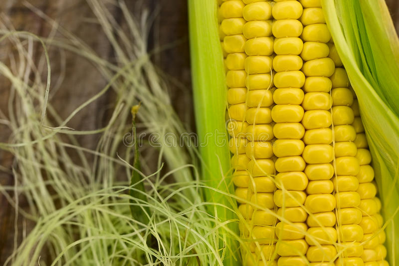 Download Ear of corn stock photo. Image of yellow, healthy, large - 25770648