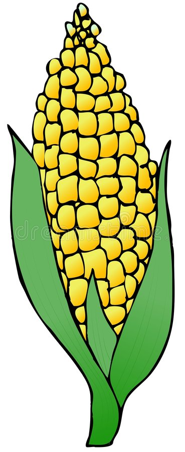Download Ear Of Corn stock illustration. Illustration of yellow - 5331487