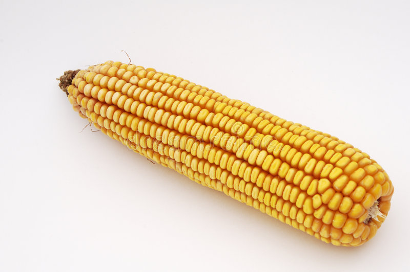 Download Ear of Corn stock photo. Image of millet, gasoline, corn - 763302