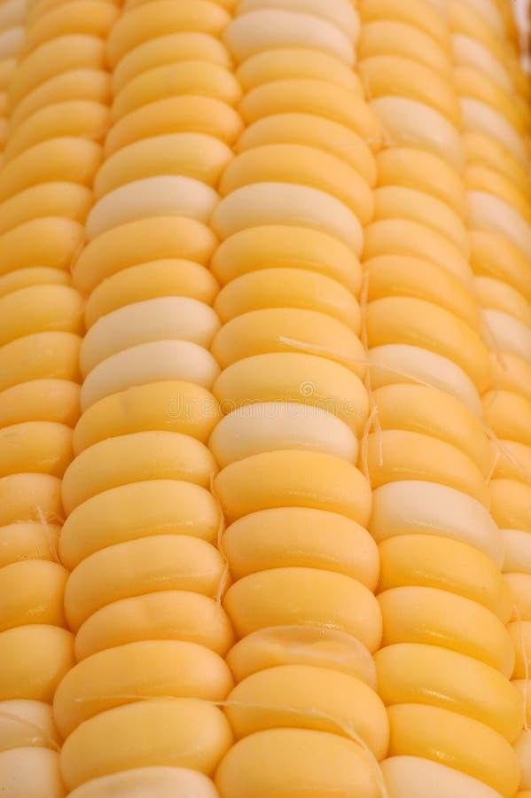 Download Ear of Corn Closeup stock photo. Image of corn, food, yellow - 191860
