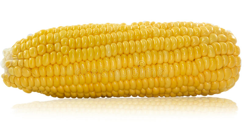 An ear of corn isolated stock images