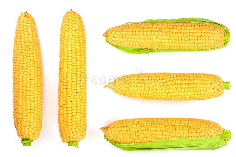 Ear of corn isolated on a white background. Top view. Set or collection royalty free stock photo