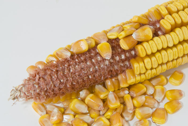 Ear of corn with kernels removed royalty free stock photos