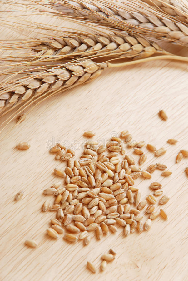 Download Ear and grain of the wheat stock photo. Image of gold - 14862462