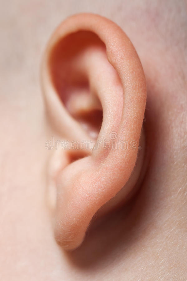 Ear Macro Royalty Free Stock Images