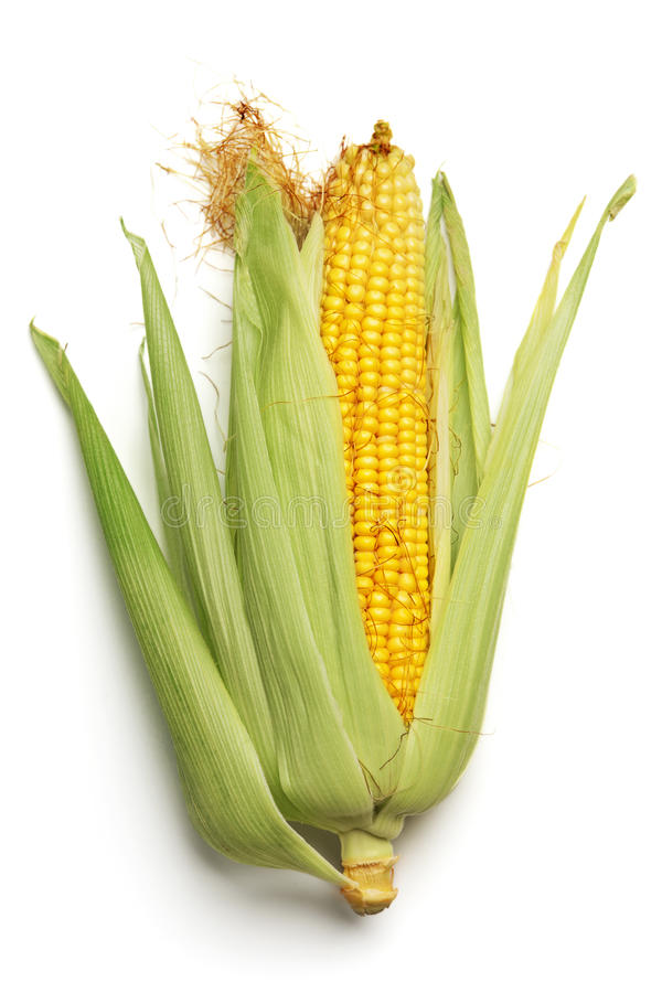 Free Ear Of Corn Royalty Free Stock Photography - 20613297