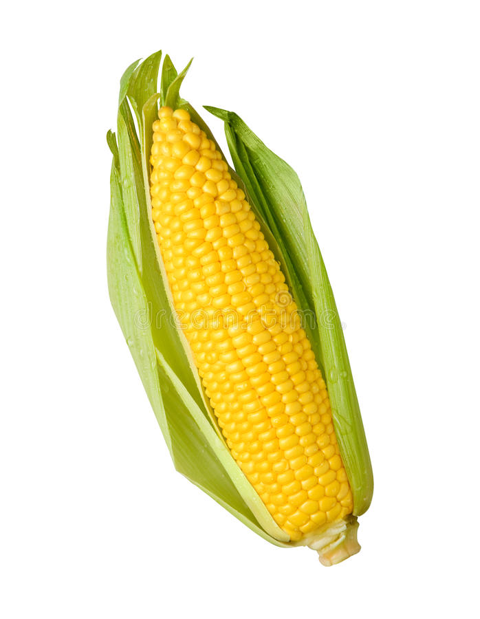 Free Ear Of Corn Isolated Stock Photo - 20472510