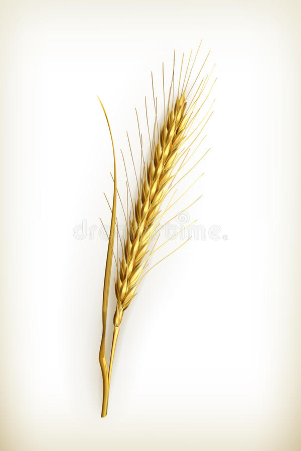 Download Ear of wheat stock vector. Image of wheat, brown, icon - 25960160